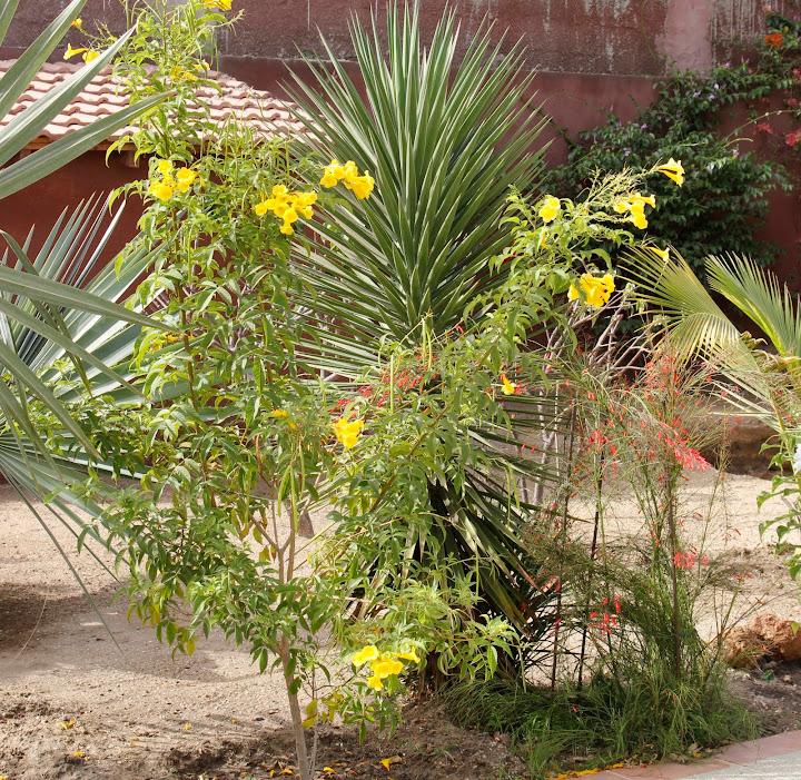 Mon jardin senegalais _MG_4819