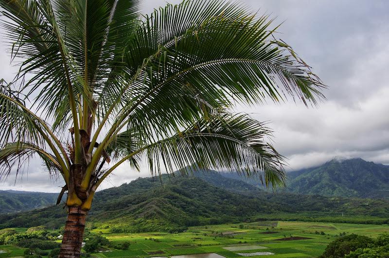 06-26-13 National Tropical Botantial Gardens - IMGP9437.JPG