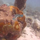Bonaire 2011 - PICT0065.JPG