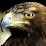 Захар Беркут's profile photo
