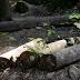 Perda de florestas mais velhas reduz diversidade da Mata Atlântica