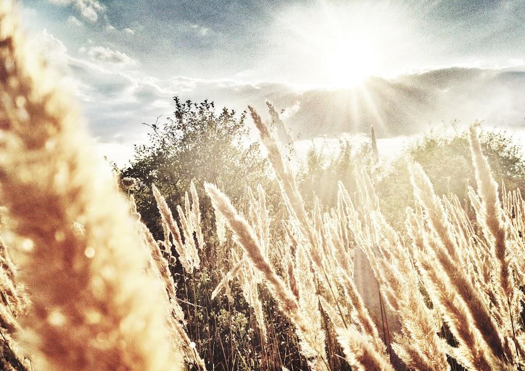 Саша Ляпота, iPhone 4s, Snapseed