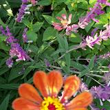Gardening 2012 - 115_1760.JPG