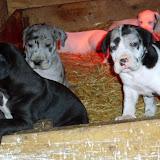 Cheyenne's babies @ 5 1/2 weeks