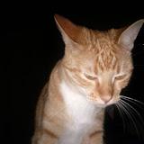 Kitteh - IMG_20110402_100452.jpg