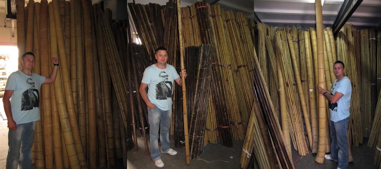 бамбук декоративный