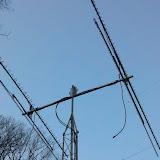 2012-01-15_16-18-35_753.jpg