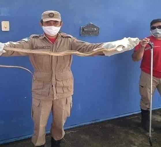 Resgate...Bombeiros resgatam cobra escondida embaixo de banco de moto, em Pau dos Ferros.