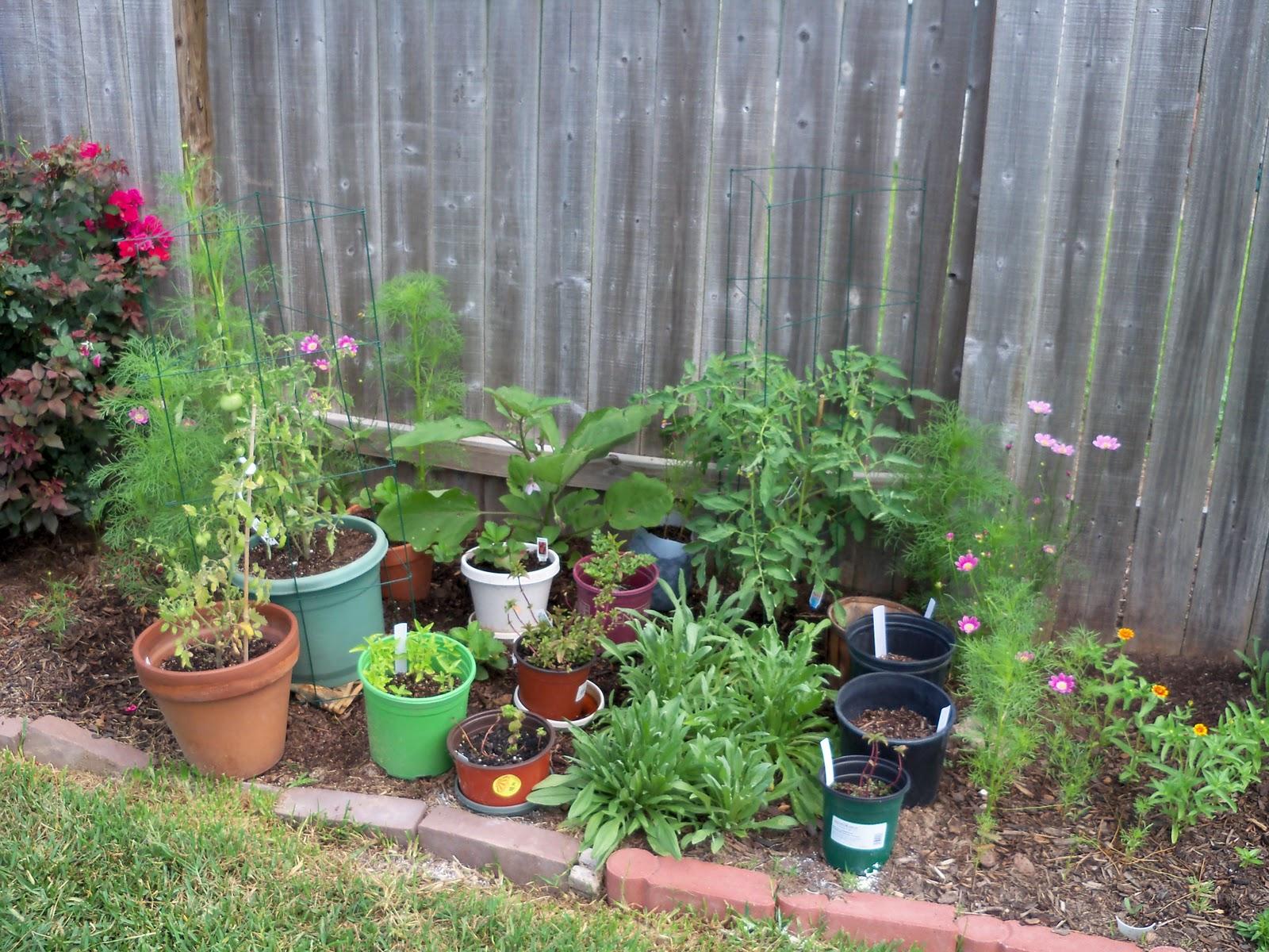 Gardening 2010, Part Two - 101_2655.JPG