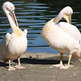 31.03.2011 Tiere Afrikas im Kölner Zoo