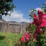 Gardening 2012 - 115_1655.JPG