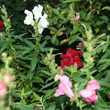 Gardening 2012 - IMG_2740.JPG