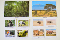 Animal Habitats Sorting and Activity Sheets
