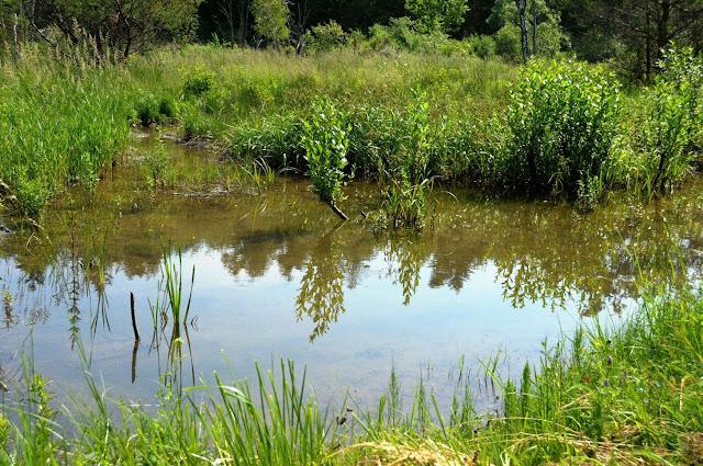 W Polanach Surowicznych - 18.06.2011_036.jpg