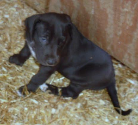 Serena & Jaspers 5-13-12 litter - SAM_3886.JPG