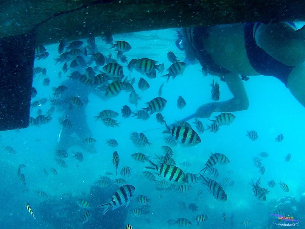 family trip pulau harapan, 1-2 agustus 2015 gopro 41