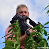 Dutch Harvest Field update #7