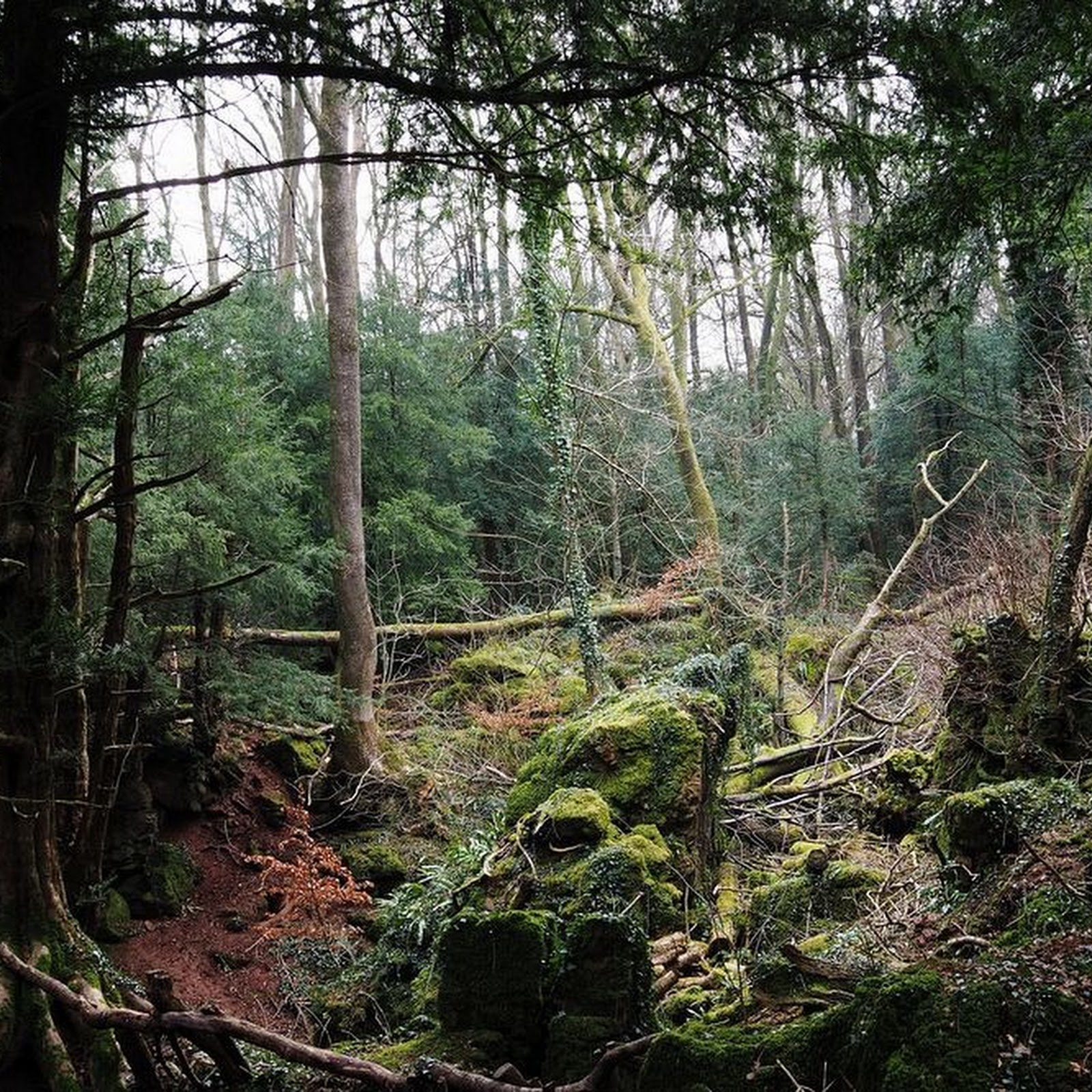 Puzzlewood: Tolkien's Inspiration For Middle Earth