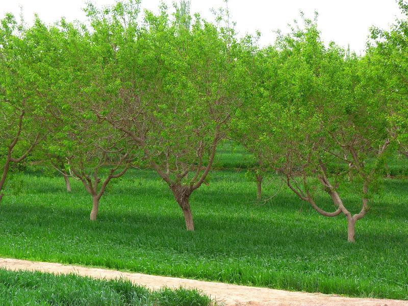 Du vert à Kasghar