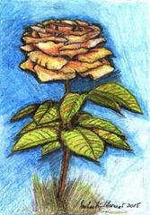 490 Yellow Rose