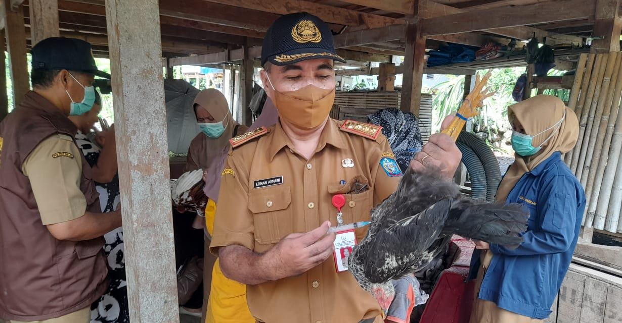 Dinas Peternakan, Kesehatan Hewan dan Perikanan Kabupaten Soppeng Giat Vaksinasi Massal Ayam Buras