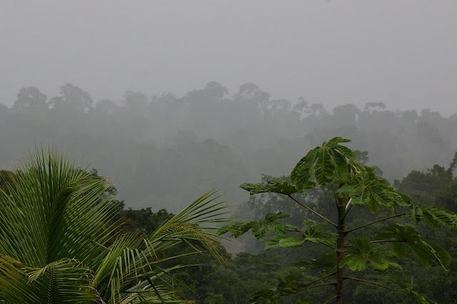 Piste de Coralie (Guyane) : l'ancien site d'orpaillage sous la pluie de l'après-midi. 26 novembre 2011. Photo : J.-M. Gayman