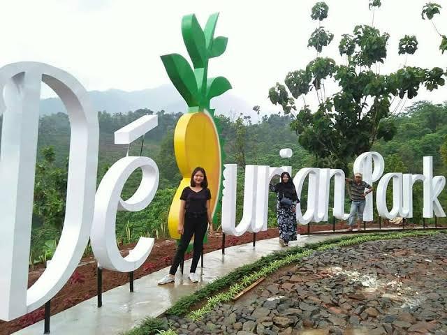 Sensasi berburu durian di de durian Park Wonosalam Jombang