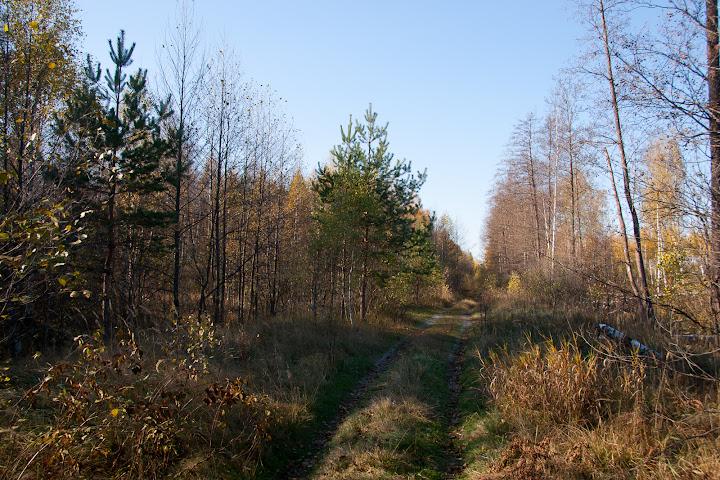 Дорога в сторону Бакшеево