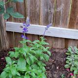 Gardening 2014 - 116_1809.JPG