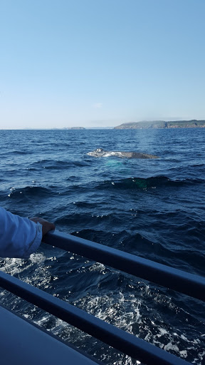 best whale watching in Newfoundland - a mother and her babies