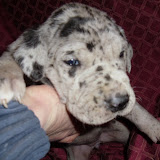 Ruby Doo Glenski @ 3 weeks