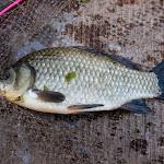 20150613_Fishing_Virlia_014.jpg