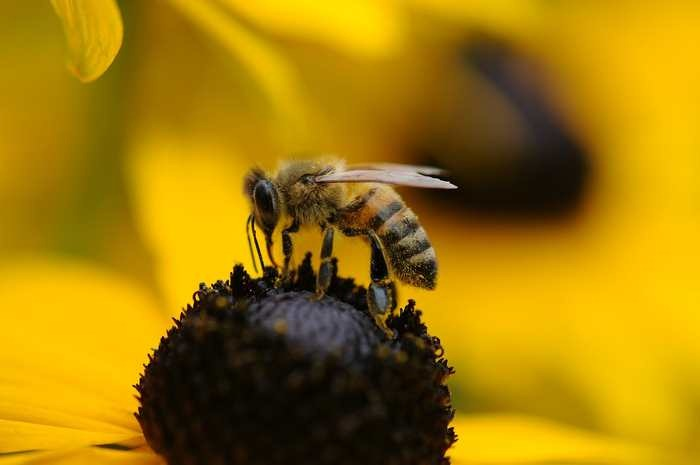 [reve-islam-abeille%255B3%255D.jpg]