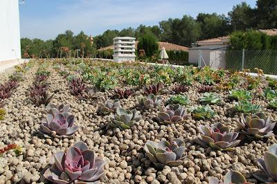 Cubierta vegetal baobab en valencia singulargreen - Cubiertas vegetales para tejados ...