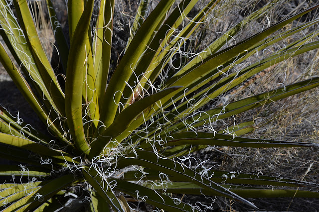 winding fibers on a yucca