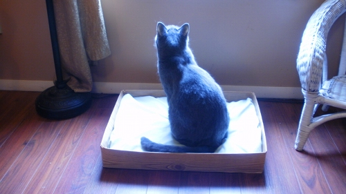 Happy Cake And Other Fabulous Things An Upcycled Pet Bed