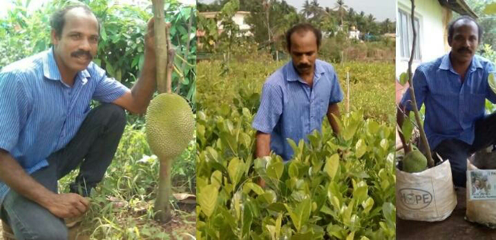ಹಲಸಿನ ಗಿಡಗಳ ರಾಯಾಭಾರಿ ಜಾಕ್ ಅನಿಲ್