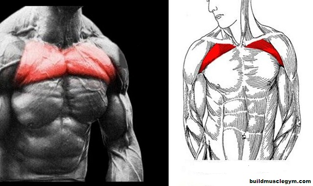 Build Your Upper Chest . Best Upper Chest Exercises
