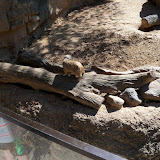 Houston Zoo - 116_8391.JPG