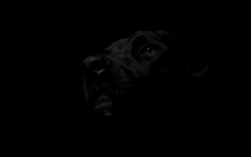 Black-Dog4