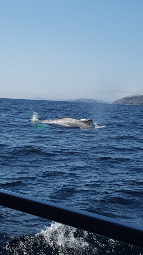 Spotted: A whale! Best whale watching in Newfoundland