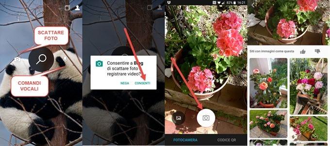 identificazione-fiori-piante-bing-search