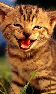 LWP dítě kočka - náhled