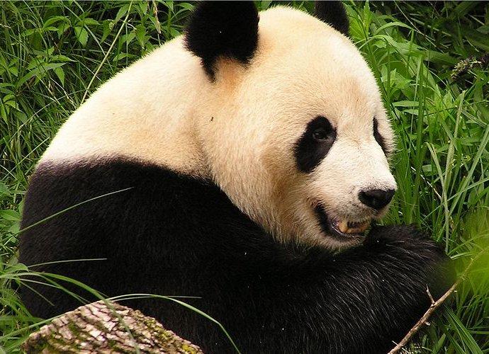 Panda processes 200m Malware files via Cloud
