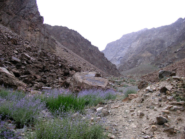 Gorge de Gishkun, 1800 m dans la chaîne de Vanj. Biotope d'Alpherakya devanica vanjica ssp. nova, juillet 2008. Photo : Jean-Marie Desse.