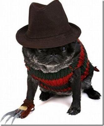 disfraces divertidos para perros  (22)
