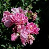 Gardening 2011 - 100_9051.JPG