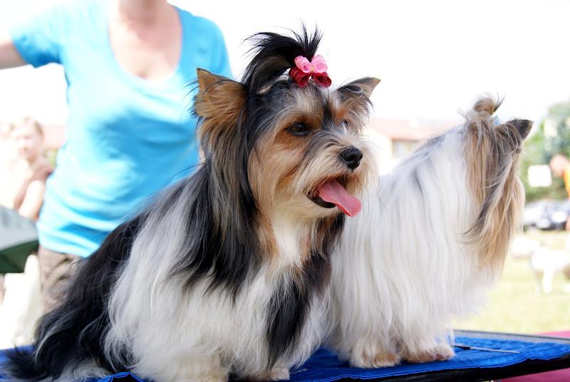 Wystawa psów - dsc00414.jpg