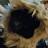 Sharie Breihan Groot avatar image