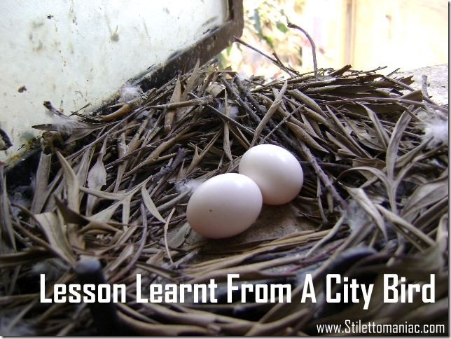 Lesson Learnt From A City Bird